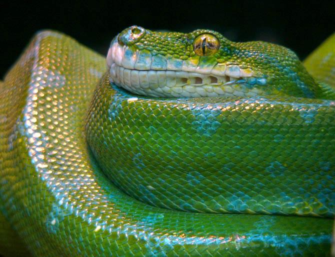"photo ""green"" tags: nature, wild animals"