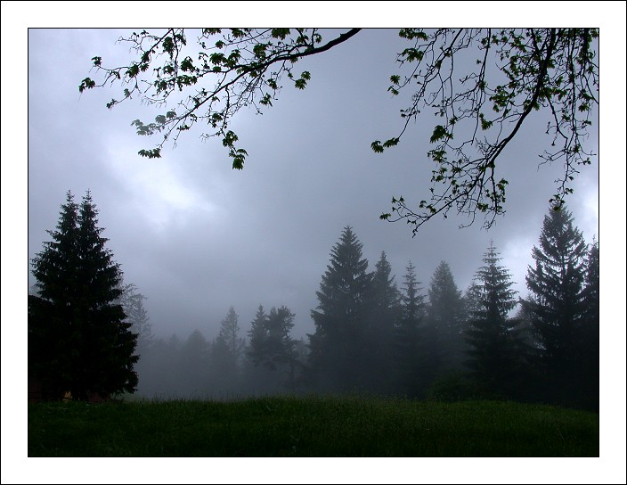 "photo ""It`s Getting Dark"" tags: landscape, forest, summer"