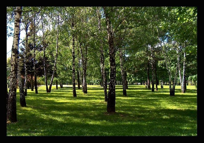 "photo ""Birchwood"" tags: landscape, summer"