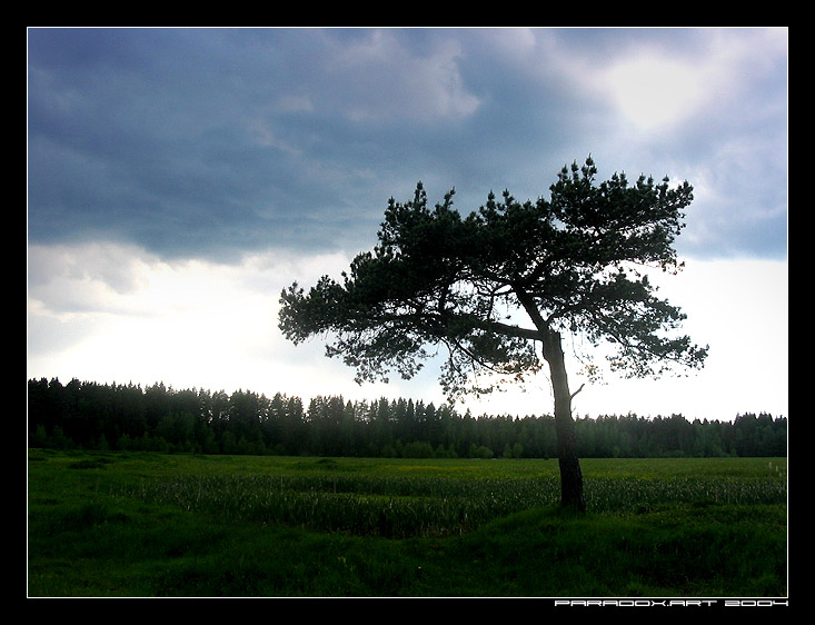 "photo ""lonely tree"" tags: landscape, forest, summer"