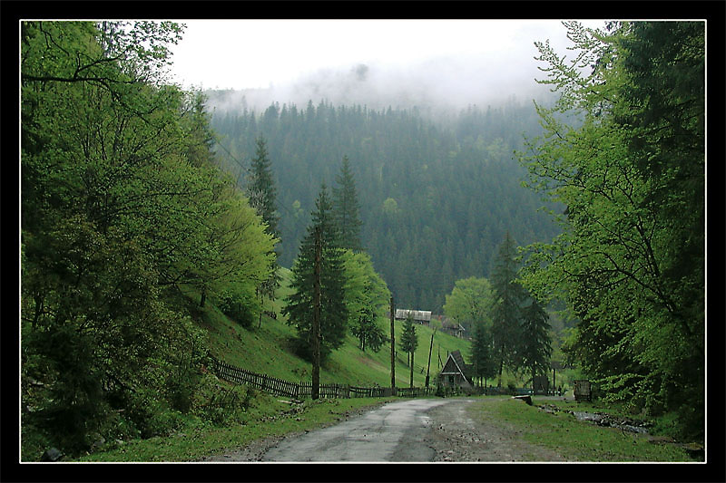 "photo ""Carpathian-2"" tags: landscape, forest, mountains"