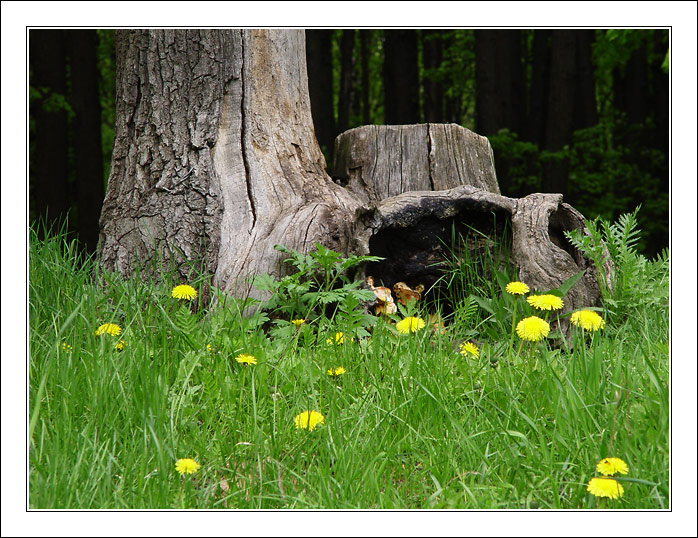 "photo ""Another picture for pleasure"" tags: landscape, forest, spring"