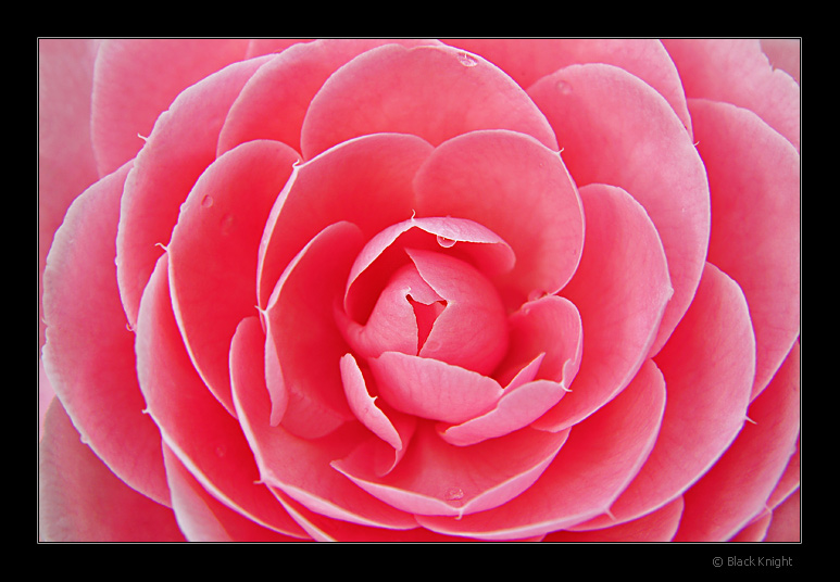 "фото ""Vibrations...deep inside..."" метки: природа, пейзаж, закат, цветы"