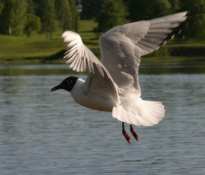 "photo ""Flight"" tags: nature, wild animals"