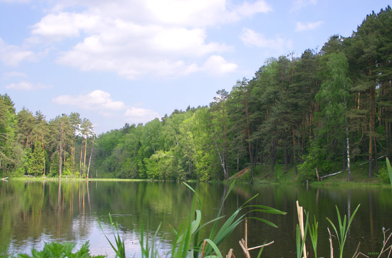 "photo ""Wood pond"" tags: landscape, forest, water"