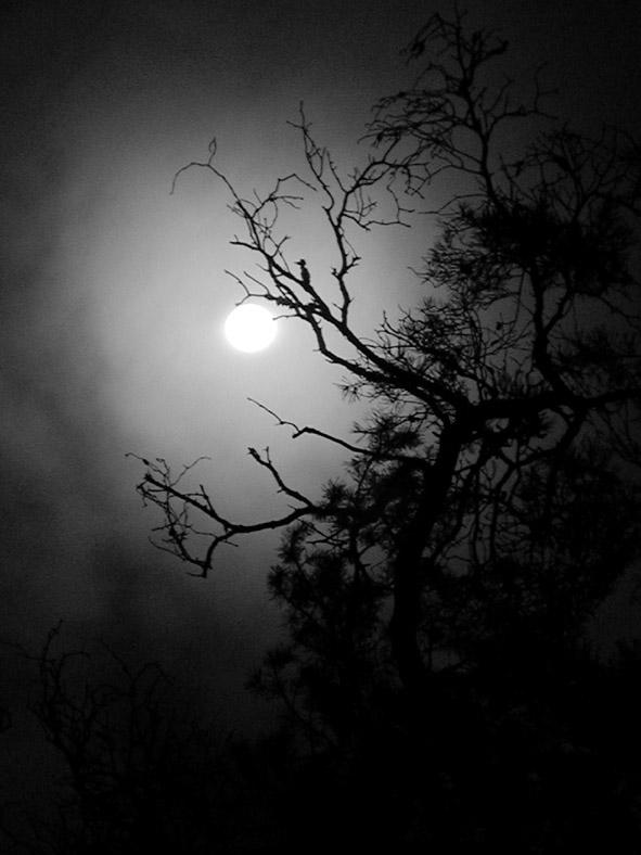 """фото """"Безумие"""" метки: пейзаж, ночь"""