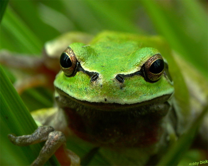 "photo ""frog"" tags: nature, wild animals"