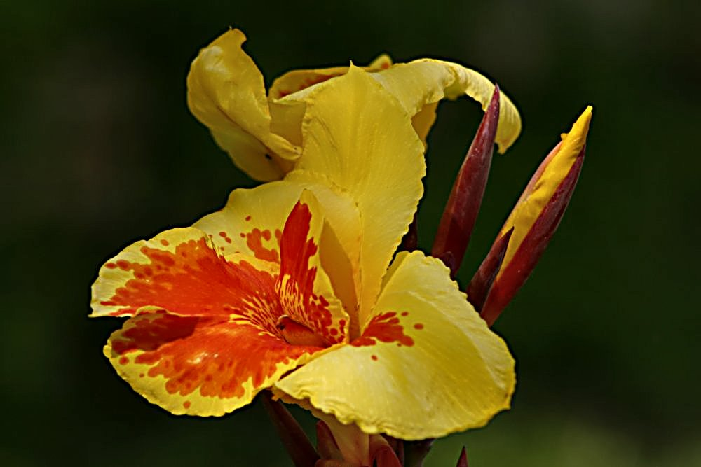 "photo ""Yellow and Red"" tags: nature, flowers"