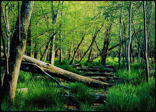 "photo ""Beavertrail ruins  Watson Mill Park"" tags: nature, landscape, forest"