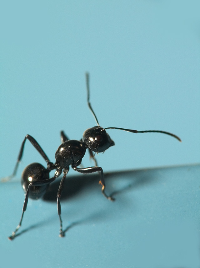 "photo ""Ant"" tags: nature, insect"