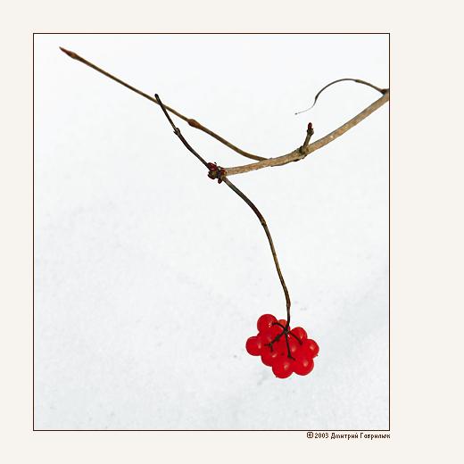 """фото """"иероглиф"""" метки: природа, цветы"""