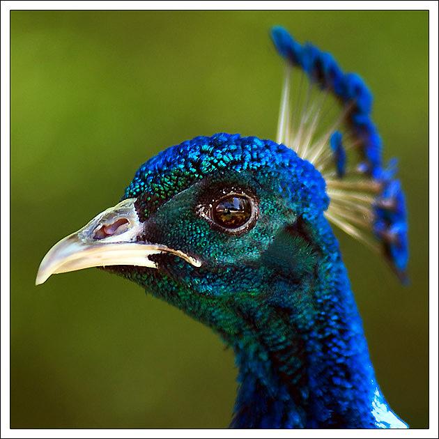 "photo ""Serious bird"" tags: nature, portrait, wild animals"