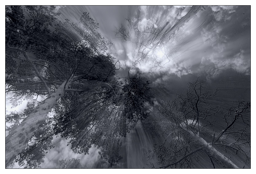 "photo """"... to light """" tags: nature, black&white,"