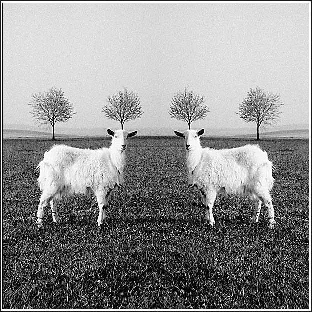 "photo ""Unicorn"" tags: genre,"