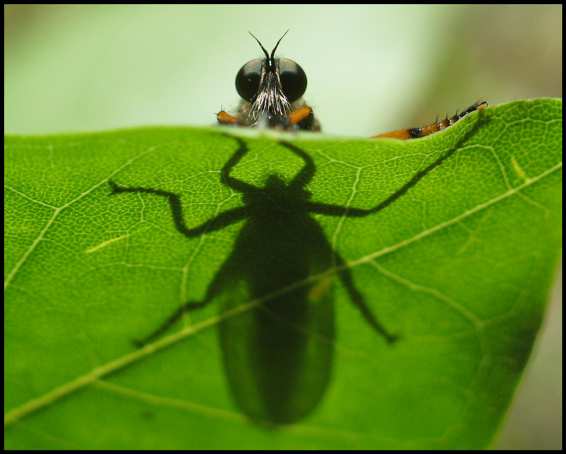 "photo ""shadow"" tags: nature, insect"