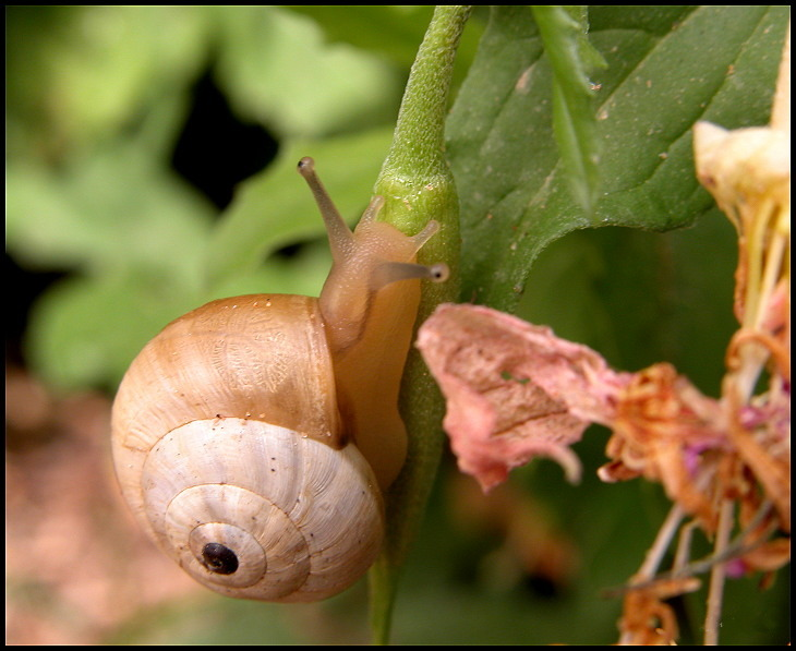 "photo ""Snail"" tags: nature, macro and close-up,"