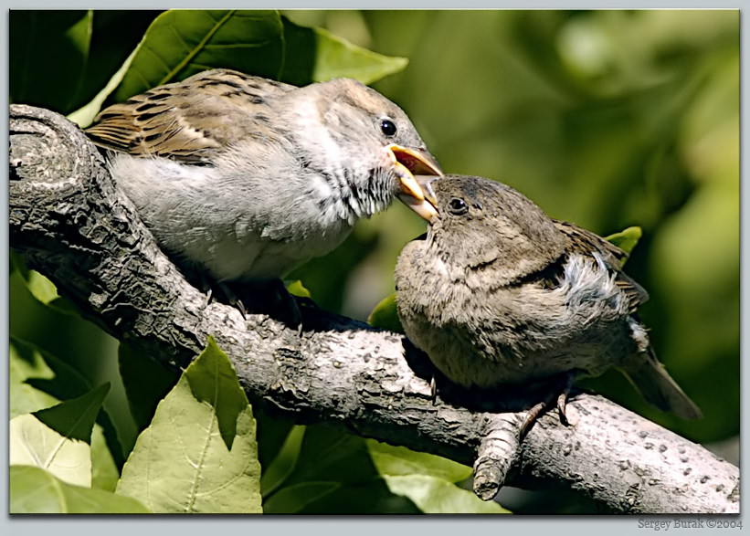 "photo ""The bird`s kiss"" tags: nature, reporting, wild animals"
