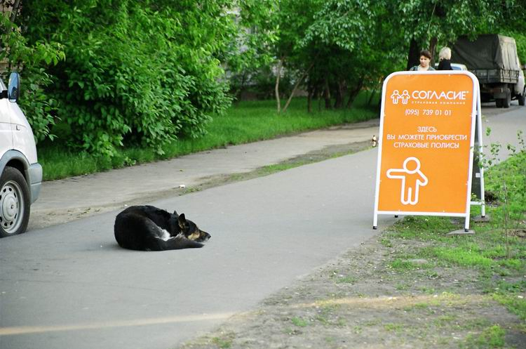 """фото """"Собачья жизнь - даже застраховать нечего."""" метки: жанр,"""