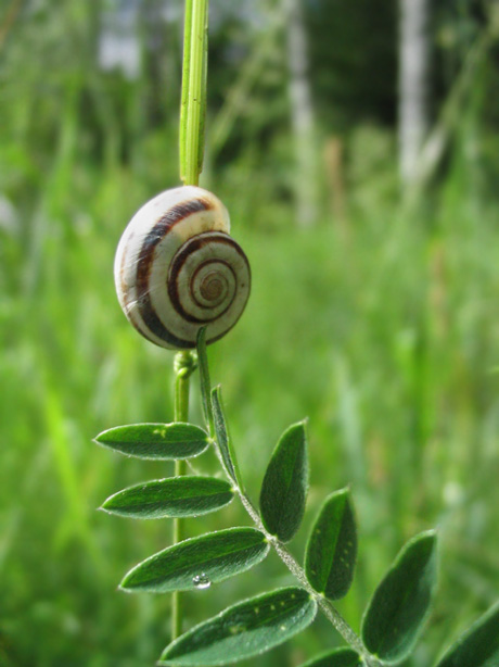 "photo ""yet another snail"" tags: macro and close-up, nature, insect"