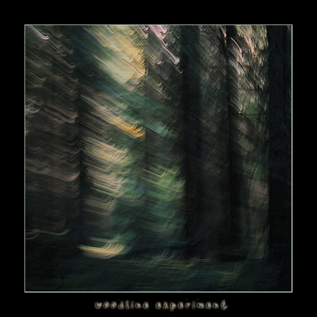 "photo ""Woodline experiment"" tags: abstract, landscape, forest"