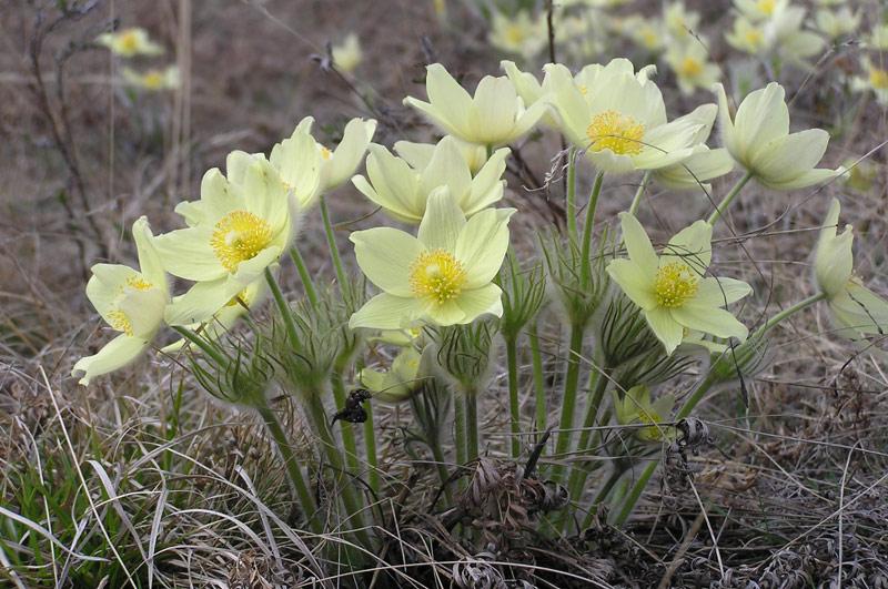 картинки природа якутии весна облегчения работы фермах