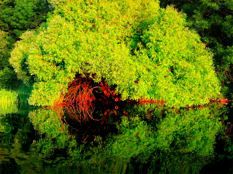 "photo ""Green explosion"" tags: landscape, forest, water"