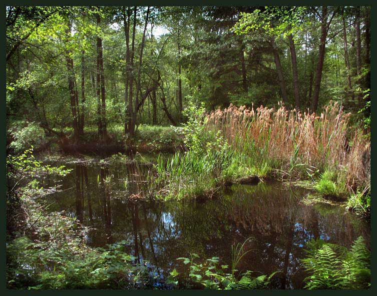 "photo ""Small river Buzjanka"" tags: landscape, summer, water"
