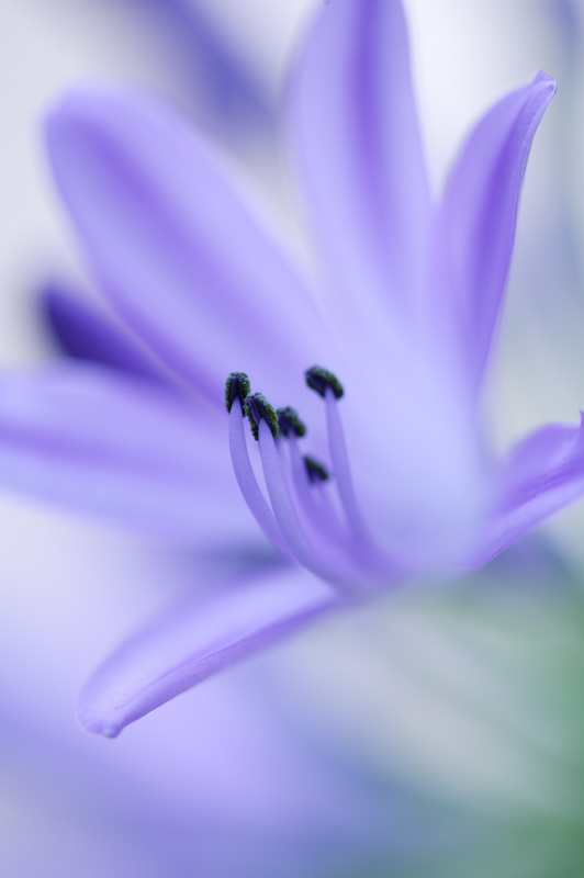 "photo ""Blue"" tags: nature, flowers"