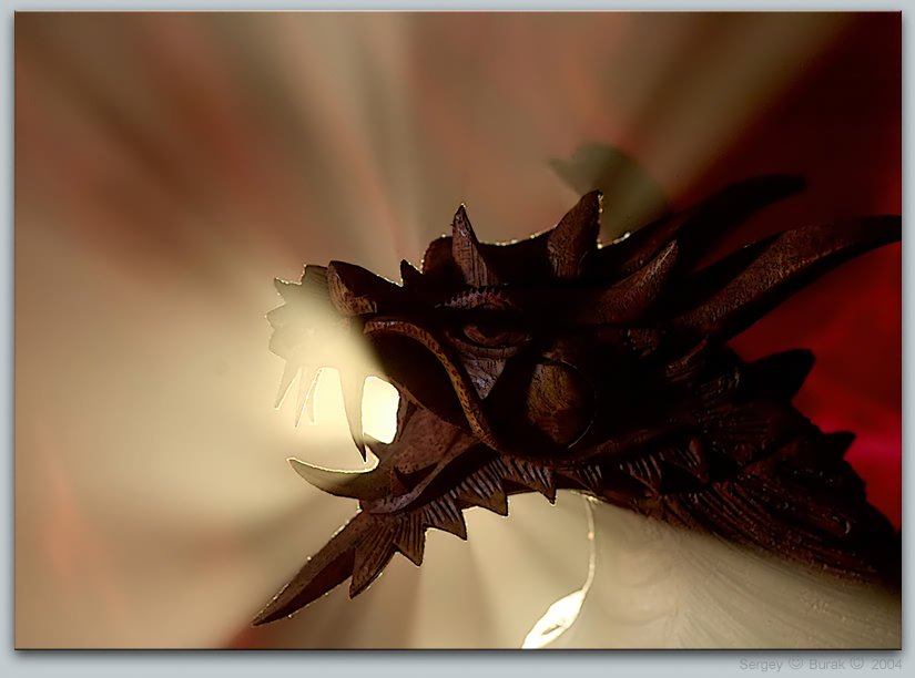 "photo ""Dragon"" tags: still life, abstract,"