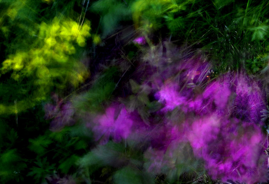 "photo ""Movement"" tags: nature, abstract, flowers"