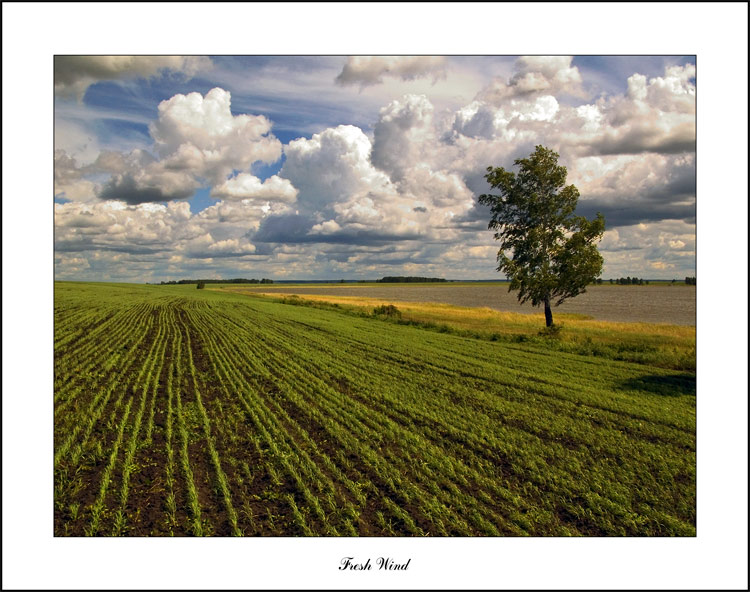 "photo ""Fresh Wind"" tags: landscape, clouds, summer"