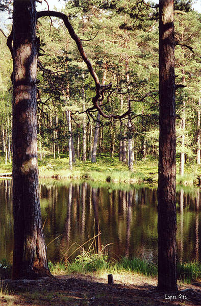 "photo ""Forest water-colours"" tags: landscape, forest, water"