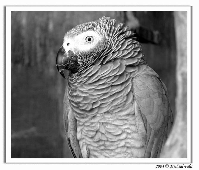 "photo ""****"" tags: nature, black&white, pets/farm animals"