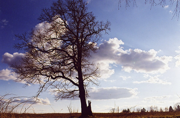 "photo ""Trees#2"" tags: landscape, nature, spring"