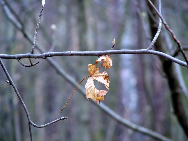 "photo ""Autumn leave"" tags: nature, flowers"