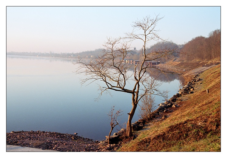 "photo ""Tree / Volhov river"" tags: landscape, travel, Europe, spring"
