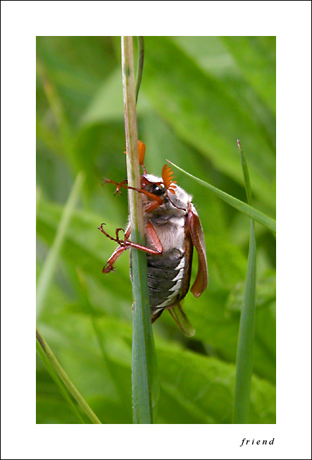 "photo ""a bug in our system;)"" tags: nature, insect"