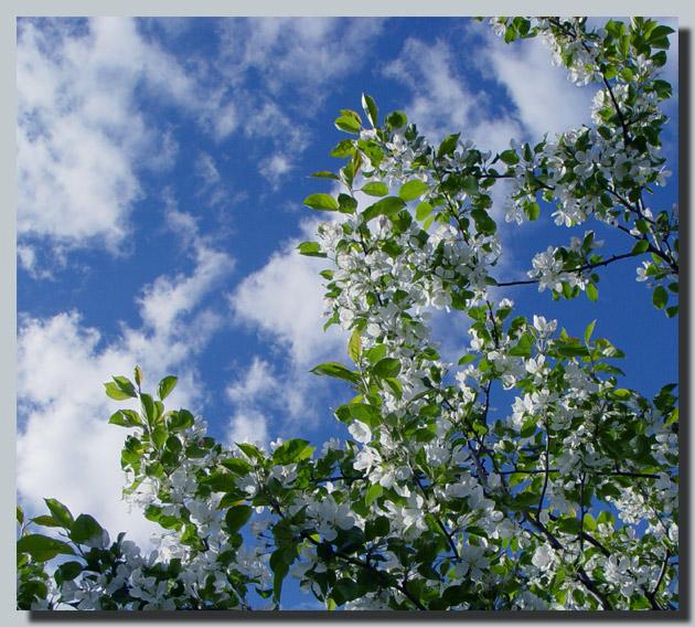 """photo """"Diagonal..."""" tags: nature, landscape, clouds, flowers"""