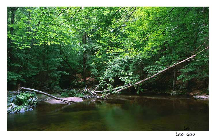 "photo ""Cool place"" tags: landscape, forest, water"