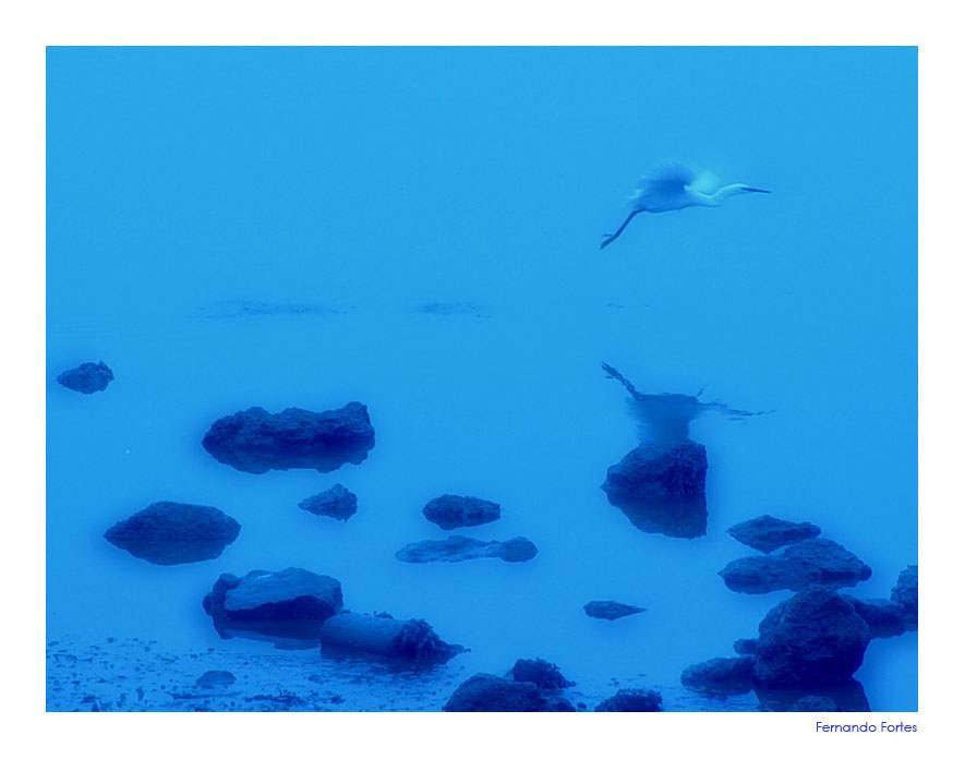 "photo ""Blue Flight"" tags: nature, wild animals"