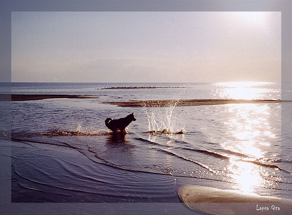 "photo ""Sea games"" tags: landscape, nature, pets/farm animals, water"