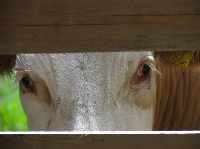 "photo ""Watching Me"" tags: nature, pets/farm animals"