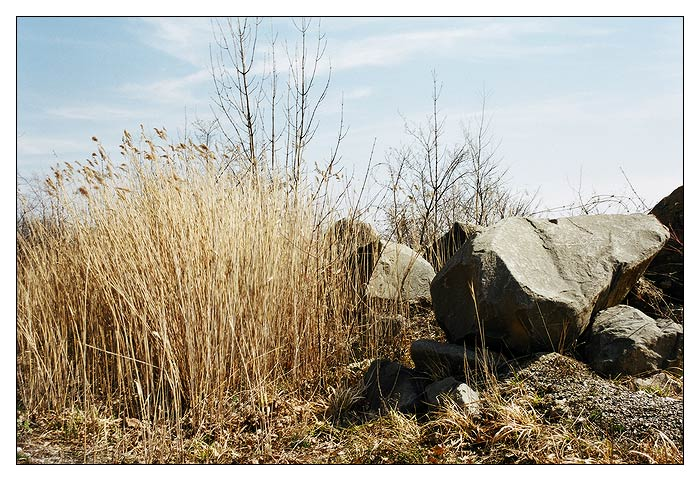 "photo ""Picture with a stone and a grass"" tags: landscape, nature, flowers, spring"