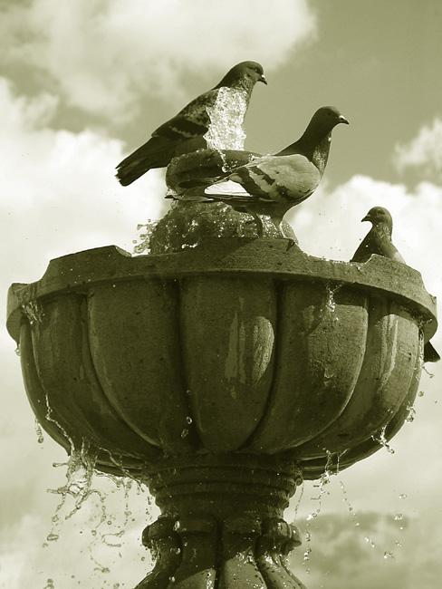 """photo """"Doves"""" tags: architecture, nature, landscape,"""