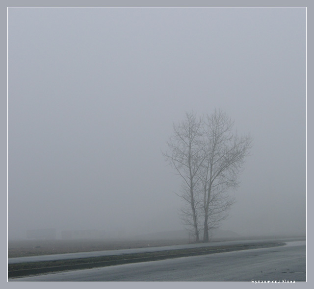 "photo ""...morning, tree, fog..."" tags: nature,"