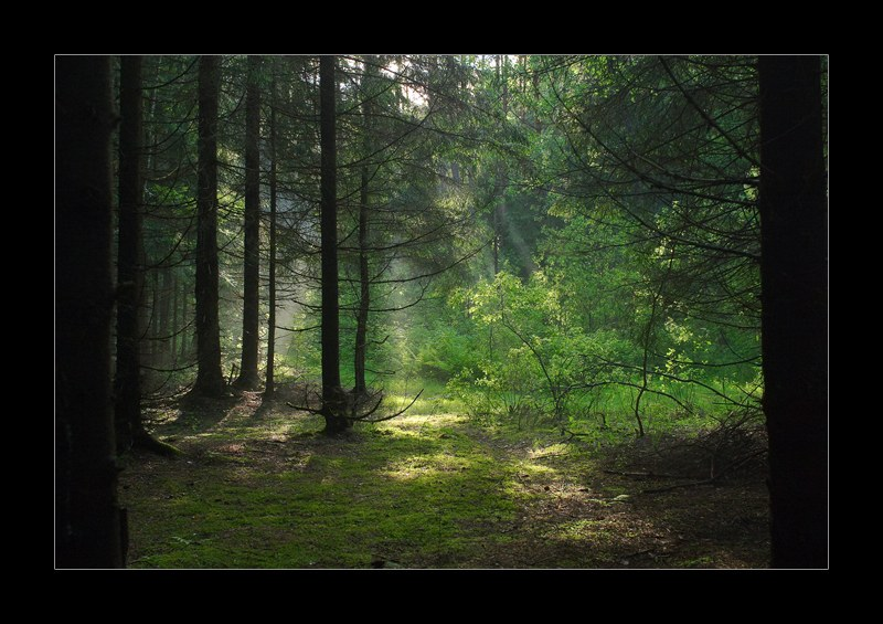 "photo ""the Forest"" tags: landscape, forest"