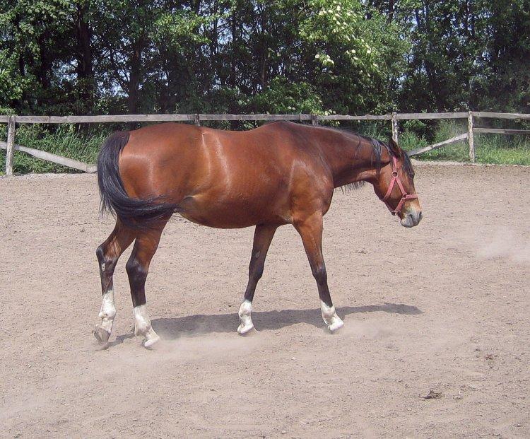 "photo ""Horse:)"" tags: nature, pets/farm animals"