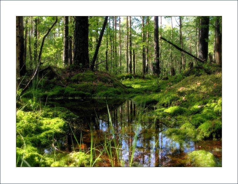 "photo ""4rest"" tags: landscape, forest, water"