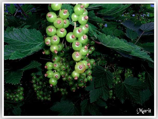 """фото """"(Rips)"""" метки: природа, макро и крупный план, цветы"""