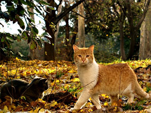 """photo """"Cats"""" tags: portrait, nature, pets/farm animals"""